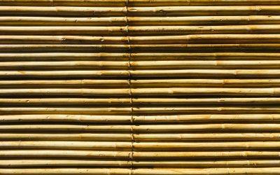 Parigi, un terrazzo e il bambù – parte 1